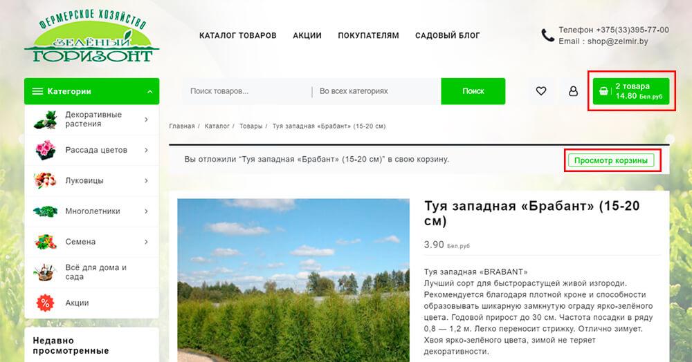 """Сосна чёрная """"Брепо"""" (20 см)"""