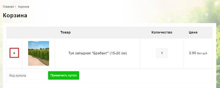 """Туя западная """"Рейнголд"""" (до 10 см)"""