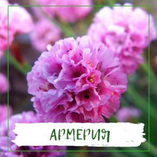Армерия
